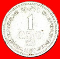 · LION (1963-1971): CEYLON ★ 1 CENT 1967! LOW START★ NO RESERVE! - Sri Lanka