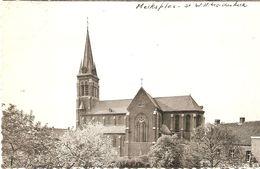 Merksplas : Kerk St. Willibrordus - Merksplas
