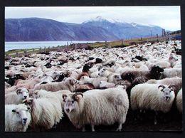 Greenland  Cards SHEEP ( Lot 209) - Greenland