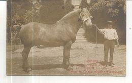 Inedit, Etalon Percheron, 3 Ans, à M. E. Brebion, Bois-Hinoust, Paris 1911, 1er Prix Médaille D'or Et Objet D'art - Otros Municipios