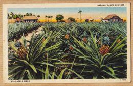 AMS076 Carte Toilée HABANA Cuba Campo De Pinas Pine-Apple Field LA HAVANE Champ D' Ananas 1920s JORDI OBISPO 31 - Cuba