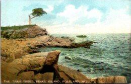 """Maine Portland Peaks Island The """"Pair Tree"""" - Portland"""