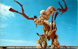 Hawaii Oahu Sea Life Park Challenge Of The Sea Sculpture By Ken Shutt - Oahu