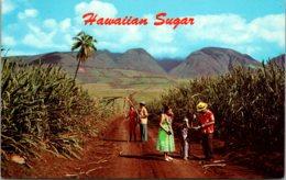 Hawaii Typical Sugar Cane Field - Oahu