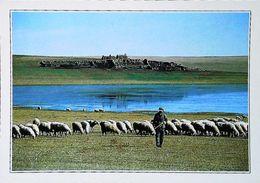 Mongolie La Steppe  Gobi   Berger Troupeau Moutons   Années 80s - Mongolei