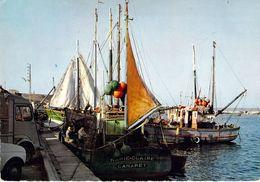 29 - Camaret - Bateaux De Pêche Dans Le Port - Camaret-sur-Mer