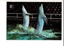 55770 - DOLFINARIUM BRUGGE DOLFIJNEN - Dolphins