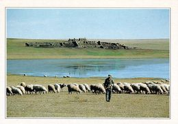 1 AK Mongolei * Die Steppe In Der Äußeren Mongolei - Story Card - Siehe Scan Der Rückseite * - Mongolei