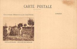 20-9501 : CULTURES MEDICINALES DAUSSE. BOUILLON-BLANC. RECOLTE DE FEUILLES - Heilpflanzen