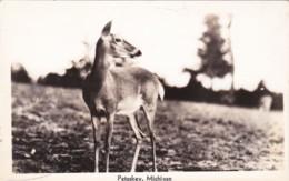 Michigan Petoskey Scene With Deer Real Photo - Etats-Unis