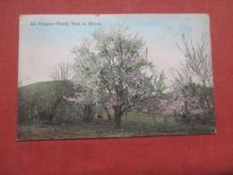 Oregon  Cherry Tree In Bloom         Ref 4256 - Etats-Unis
