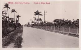 CUBA(ARBRE) - Cuba