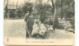 75* PARIS -   Jardin Des Plantes Les Pelicans - Parken, Tuinen