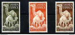 SAHARA **91/3 Nuevo Sin Charnela. Cat.2,50 € - Sahara Espagnol
