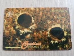 DOMINICA   GPT $ 10-  Hydroids      DOM-7B    7CDMB     Fine Used Card  ** 2790** - Dominica