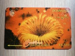 DOMINICA   GPT $ 10-  FAN WORM       DOM-7J    7CDMJ     Fine Used Card  ** 2794** - Dominica
