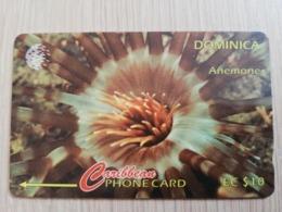 DOMINICA   GPT $ 10-  ANEMONE      DOM-9A    9CDMA     Fine Used Card  ** 2801** - Dominica