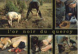 L'or Noir Du Quercy. Truffes, Cèpes, Cavage Avec Un Cochon - 04601012 - Editions Les Authentiques - BE - Hongos