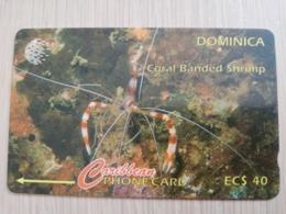 DOMINICA   GPT $ 40- CORAL BANDED SHRIMP         DOM-9I    9CDMI     Fine Used Card  ** 2809** - Dominica