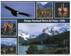 (F 25) Chile - Torres Del Paine Park - Chile