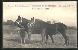 CPA Marzy, Prix D`Honneur 1908, Chevaux De Trait Nivernais, Jumenterie De La Pétroque Par Nevers - Nevers
