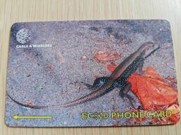 DOMINICA   GPT $ 20,-   GROUND LIZARD  244-B   244CDMB   Fine Used  Card  ** 2844** - Dominica