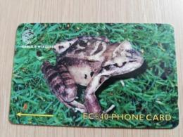 DOMINICA   GPT $ 40,-   MOUNTAIN CHICKEN   244-C   244CDMC   Fine Used  Card  ** 2845** - Dominica