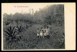 SÃO TOMÉ E PRÍNCIPE - Avenida De Pitas. (Edition A. Palanque Nº 51) Carte Postale - São Tomé Und Príncipe