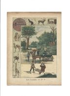 LAMAS Jardin D'Acclimatation PARIS ANIMAL Didactique Protège-cahier Couverture 220 X 175 Bien 3 Scans RARE - Schutzumschläge