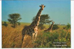 Wild Life Friends. Greetings From Uganda (Girafe), Carte Postale Neuve Non Circulée - Uganda