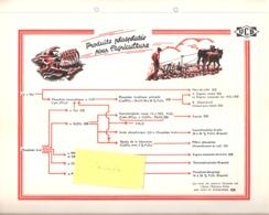 Publicité-+/-1950-Union Chimique Belge(UCB)-Produit(s) Phosphaté(s) Pour L'Agriculture-Chimie-formule-Engrais-planche A4 - Reclame