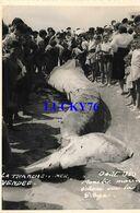 La Tranche Sur Mer Monstre Marin Echoué Sur La Plage Aout 1950 - La Tranche Sur Mer