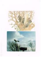 """Lot De 8 Cartes """"OISEAUX"""" - Birds"""