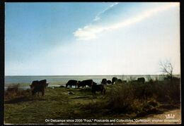 EN CAMARGUE Avec LES GARDIANS - TAUREAUX EN LIBERTE - Bulls In Freedom St Remy De Provence 1981 - Saint-Remy-de-Provence