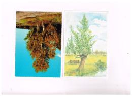 """Lot De 8 Cartes """"ARBRES"""" - Trees"""