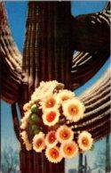 Cactus Giant Saguaro Blossoms - Cactus