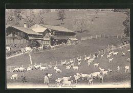 Suisse Berne Saanen, Schweizer Saanenziegen Ziegen Goat Chalet - BE Berne