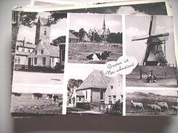 Nederland Holland Pays Bas Ameland Met Koeien En Schapen - Ameland