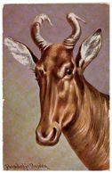 HUNT Antelope By DONADINI Vintage Colorful PELUBA 236a PC Germany 1920s - Donadini, Antonio