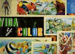 Album Chromo - 033 - VIDA & COLOR - Scolastici
