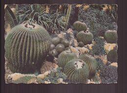 COUSSINS DE BELLE MERES - Cactus