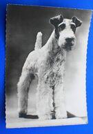 DOG CHIEN LAKELAND TERRIER Carte Postale Photo Animaux Envoi Port Payé☛Docteur Médecin☛verso Publicité Pharmacie Médical - Non Classés