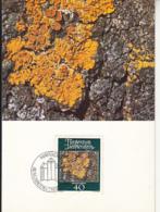 PLANTS, COMMON ORANGE LICHEN, CM, MAXICARD, CARTES MAXIMUM, OBLIT FDC, 1981, LIECHTENSTEIN - Vegetales