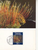 PLANTS, CREEPING FEATHERMOSS, CM, MAXICARD, CARTES MAXIMUM, OBLIT FDC, 1981, LIECHTENSTEIN - Vegetales