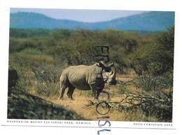 Rhinocéros. Mount Ejo Safari Park. - Namibia
