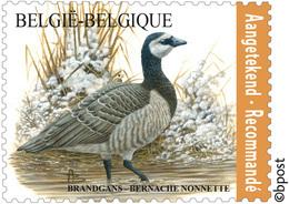 Belg. 2020 - La Bernache Nonnette ** (timbre Pour Recommandé)  - De Brandgans** Gratis Verzending (Envoi Gratuit) - Belgien