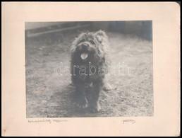 1929 Kutya, Fotó Kartonra Ragasztva, 17,5x23 Cm - Other Collections