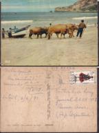 C. Postale - Nazaré - Bois Puxando Um Barco - 1971 - Circulee - A1RR2 - Leiria