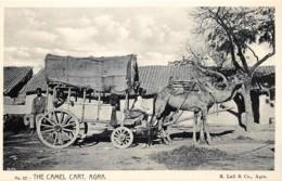 Inde - Agra - The Camel Cart - India
