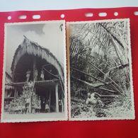 CARTE PHOTO 3 CARTES DILLY JUNGLE HABITATION - Papua-Neuguinea